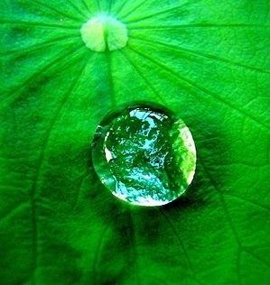 151003 droplet on leaf