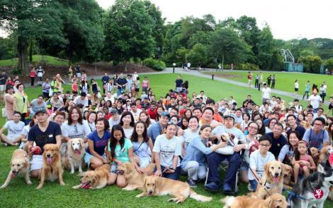 大约150名狗主带着自己的黄金猎犬,到植物园为患癌的善杰庆祝13岁生日。(摄影/庄耿闻)